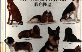 《名犬:全世界300多种名犬的彩色图鉴》PDF电子书